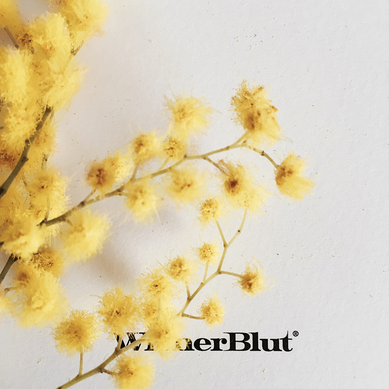 WienerBlut Mimose800